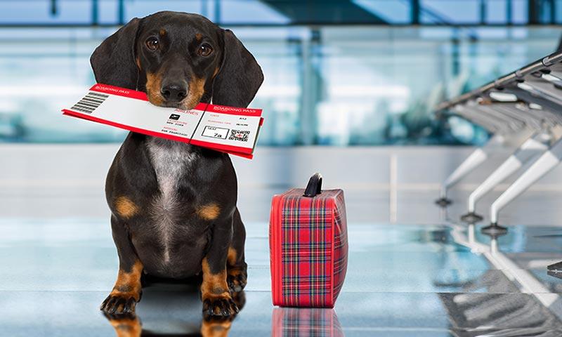 Viajes en avión con mascotas