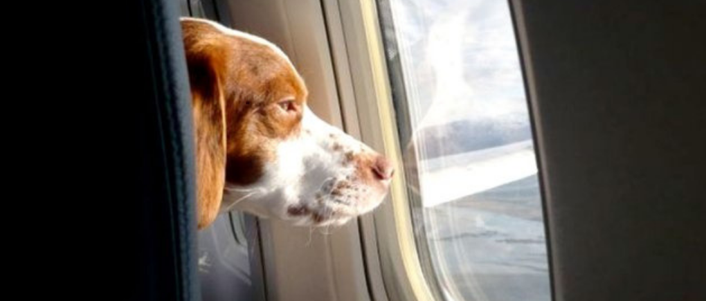 Perro en un avión